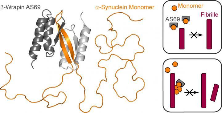 Research into Parkinson's disease: Binding-protein prevents fibril proliferation   EurekAlert! Science News