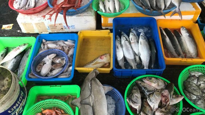 New UN High-Seas Treaty Must Close Gaps in Biodiversity Governance