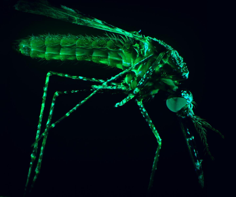 Malaria Under Arrest: New Drug Target Prevents Deadly Transmission