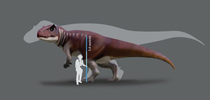 Newswise: Tracking Australia's gigantic carnivorous dinosaurs