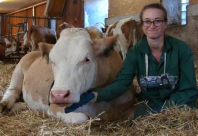 Newswise: Cows prefer