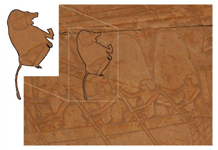 Newswise: Mummified baboons shine new light on the lost land of Punt