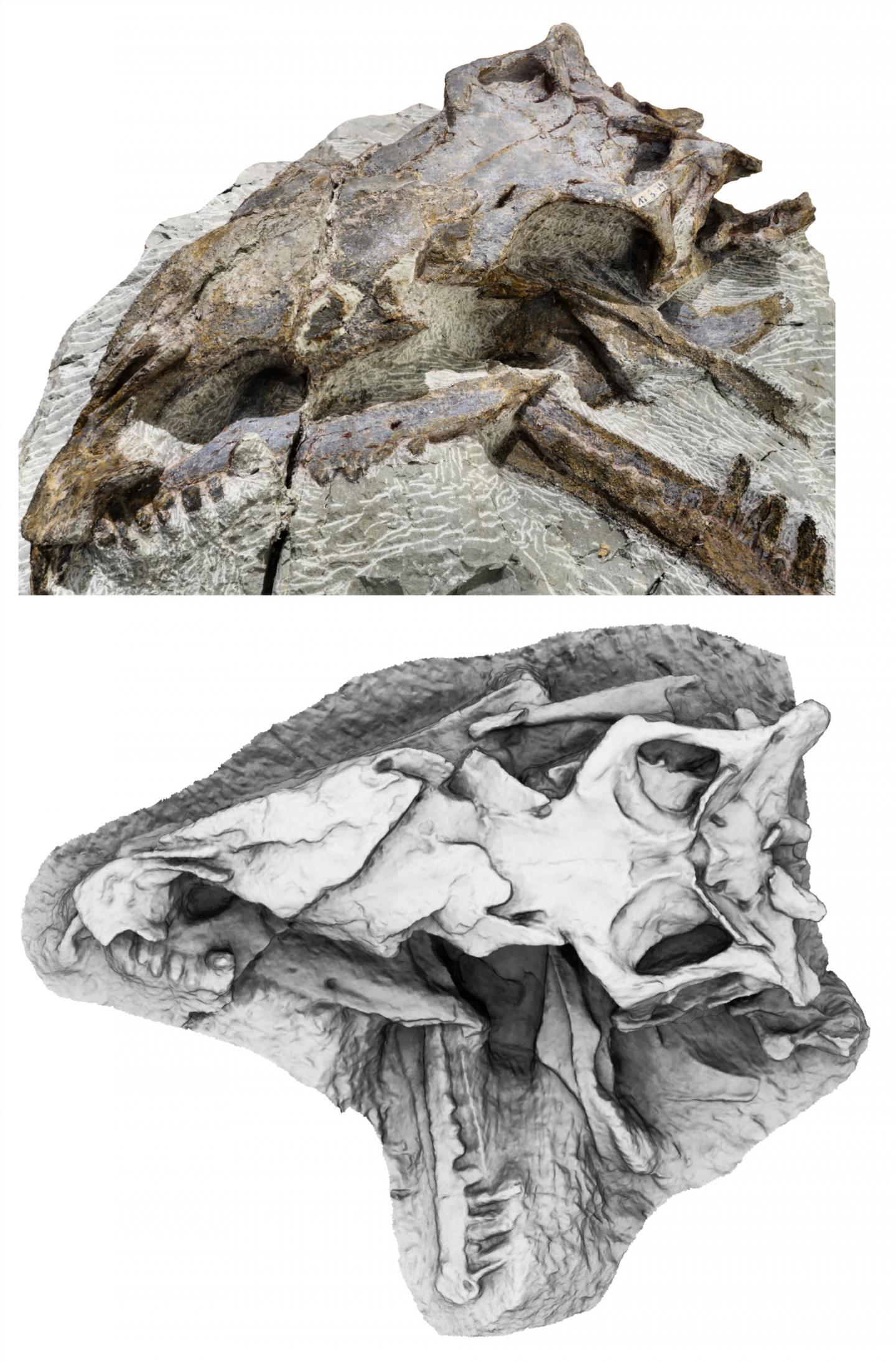 Newswise: Dinosaur species: 'Everyone's unique'