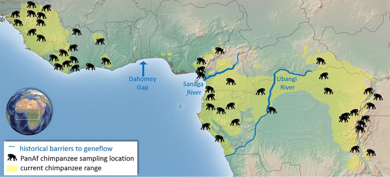 Newswise: Chimpanzees without borders