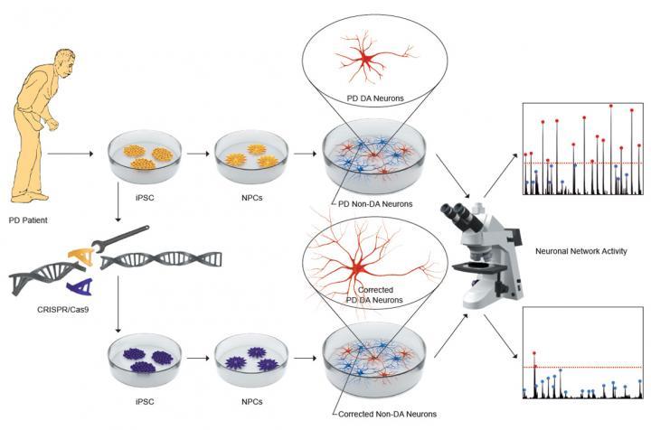 Identified an early neuronal dysfunction in Parkinson