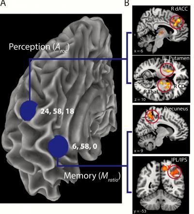З'єднання між різними областями мозку лежать в основі докладного самоаналізу.