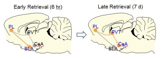Provigil memory supplement reviews