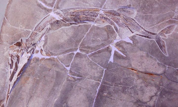 Швейцарские ученые обнаружили новые виды древних рыб