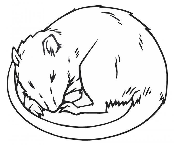 Line Drawing Rat : Sleeping rat image eurekalert science news