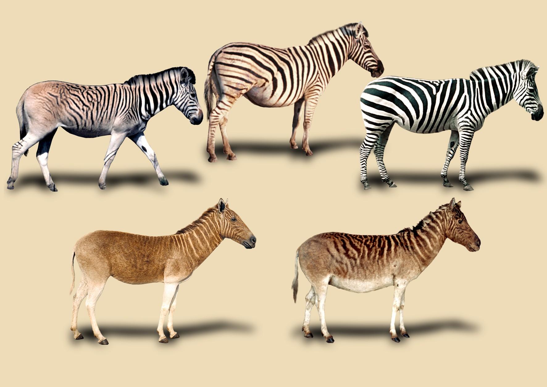 Patterns Of Evolutionppt Google Slides